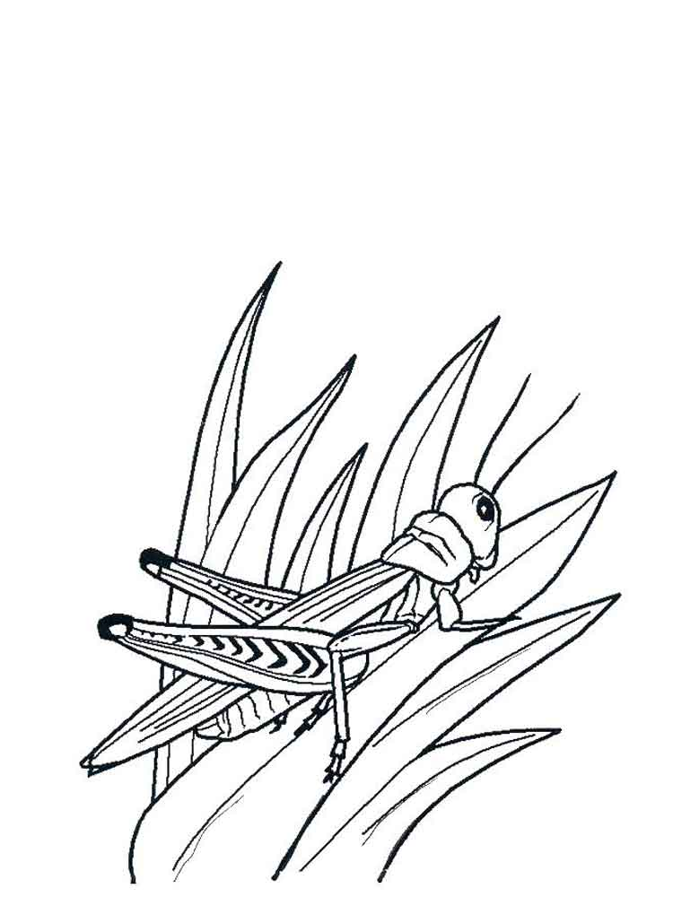 Free Grasshopper coloring pages. Download and print