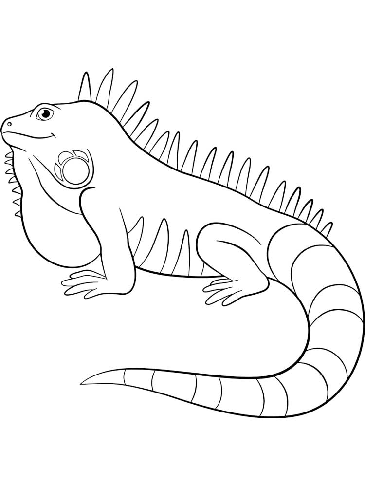 Free Iguana coloring pages. Download and print Iguana