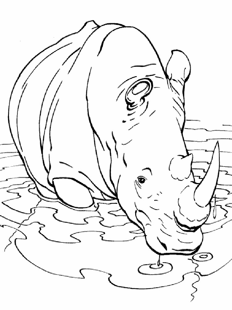 Camel Coloring Pages To Download And Print For Free