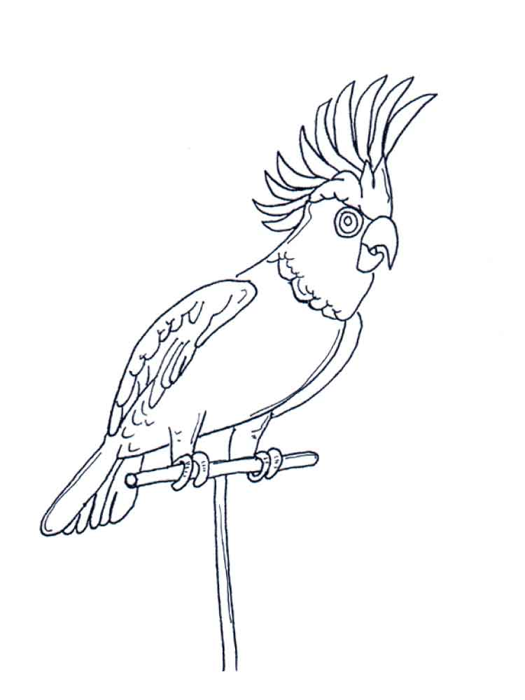 Parrot coloring pages. Download and print parrot coloring