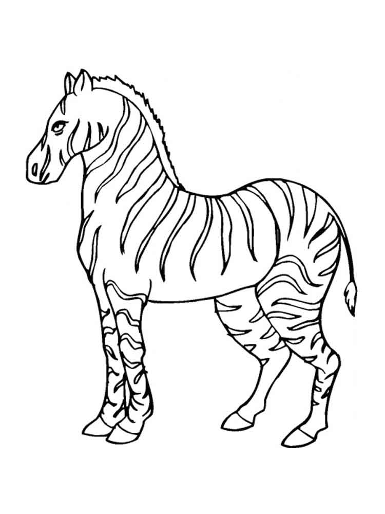 Zebra coloring pages. Download and print zebra coloring pages
