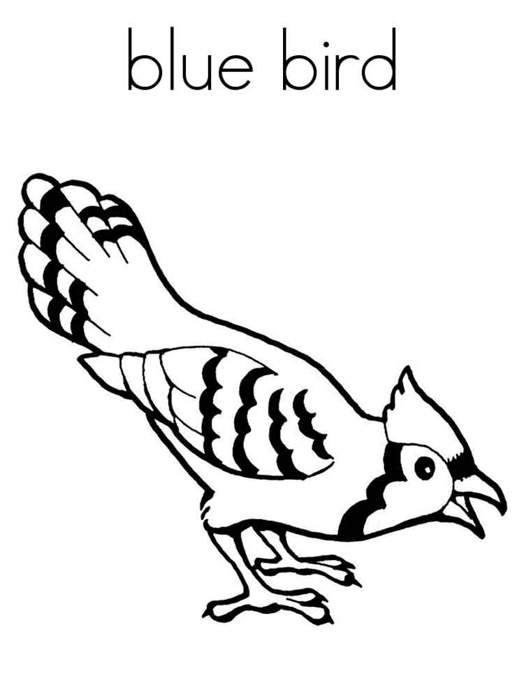 Bluebird coloring pages. Download and print Bluebird