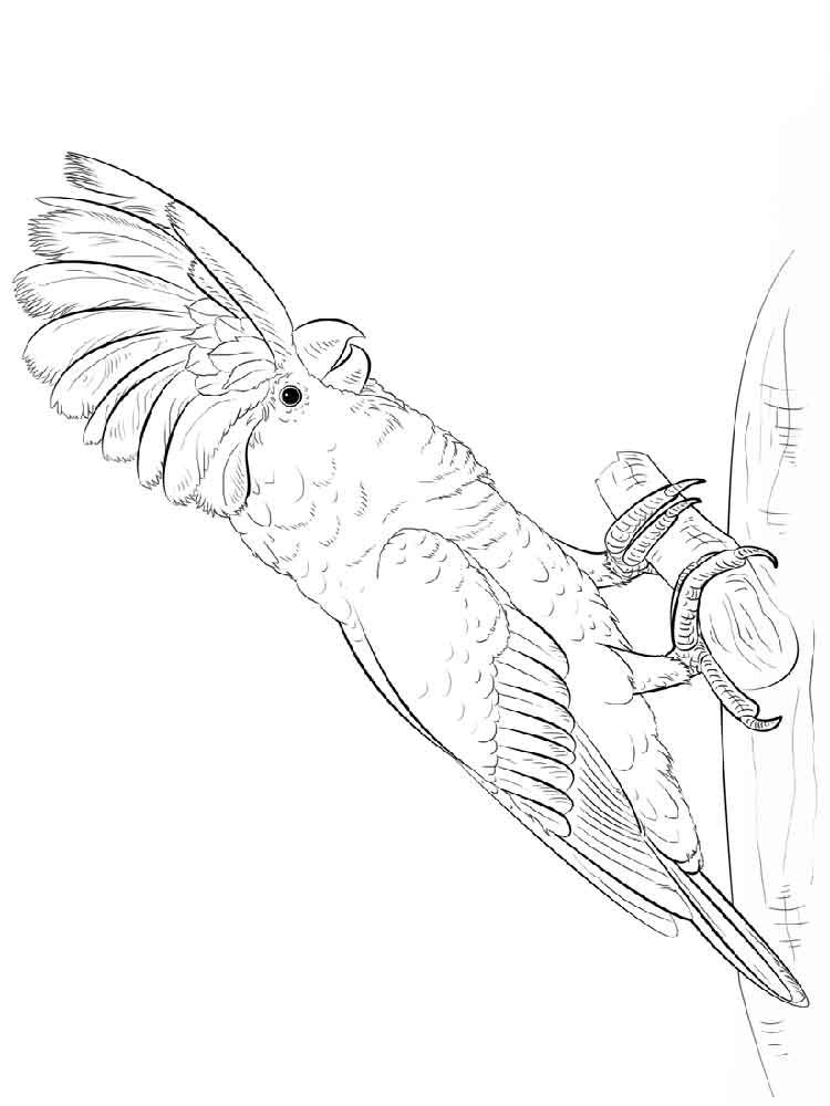 Emu Coloring Pages Download And Print Emu Coloring Pages