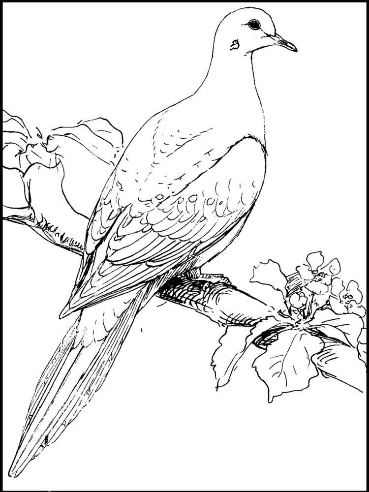 Pictures Bird Nest Pencil Drawing