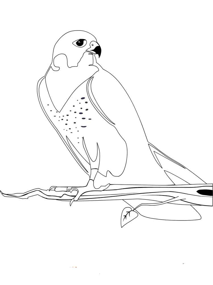 Falcons coloring pages. Download and print Falcons