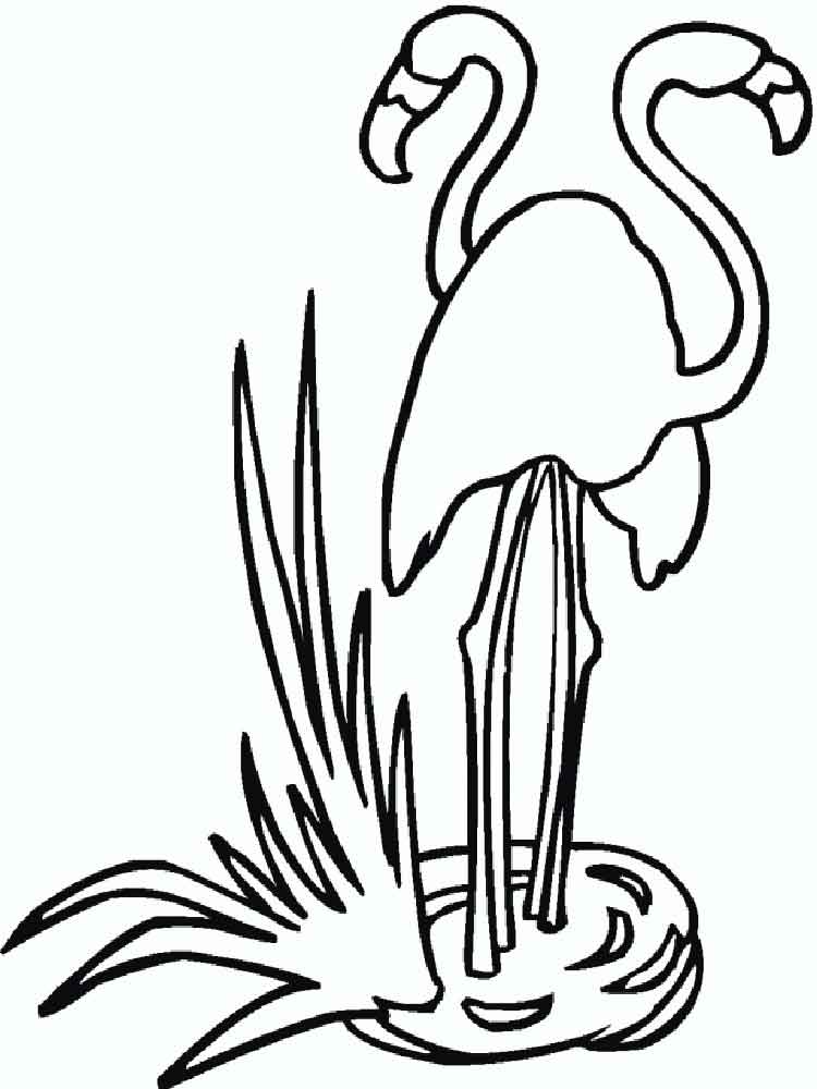 Flamingo coloring pages Download and print Flamingo