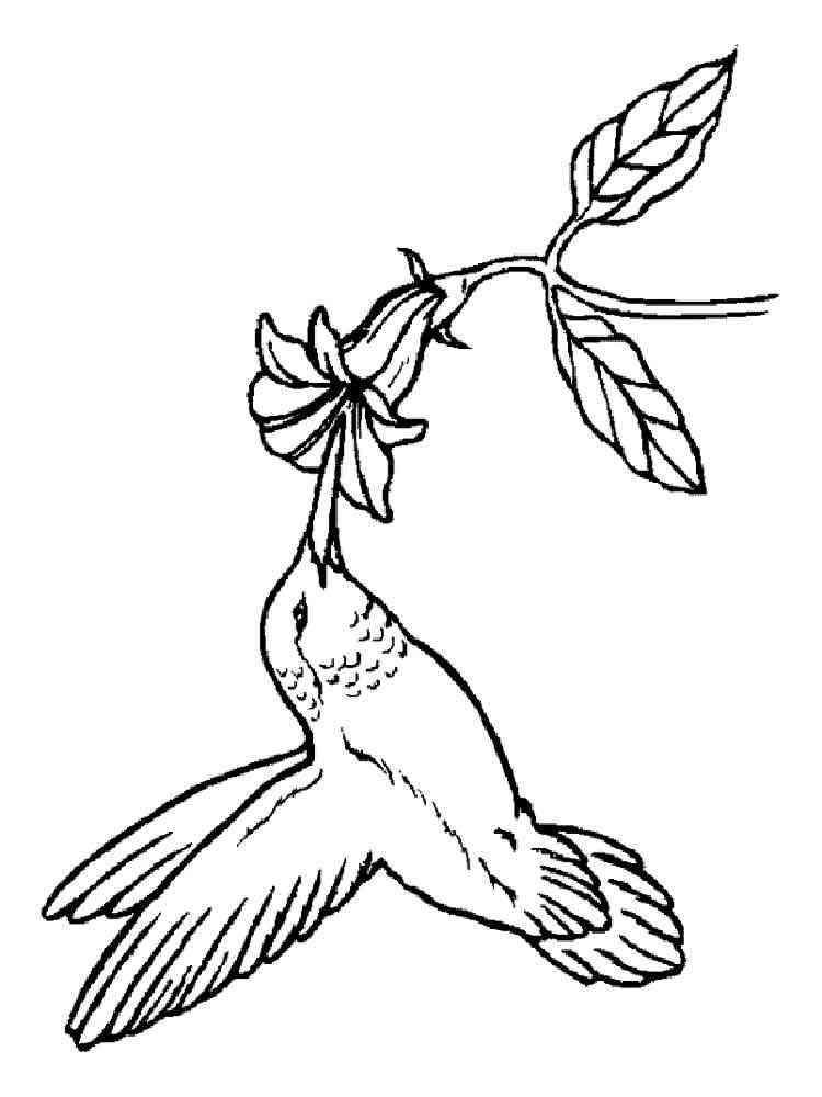 Hummingbird coloring pages. Download and print Hummingbird