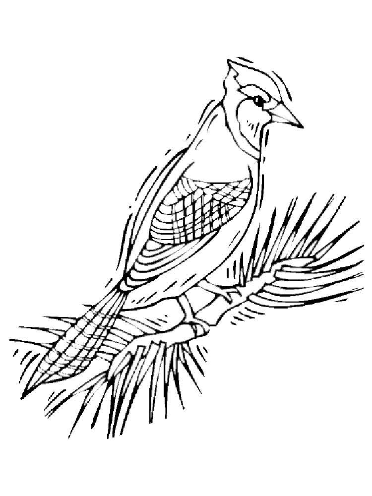 Blue Jay coloring pages. Download and print Blue Jay