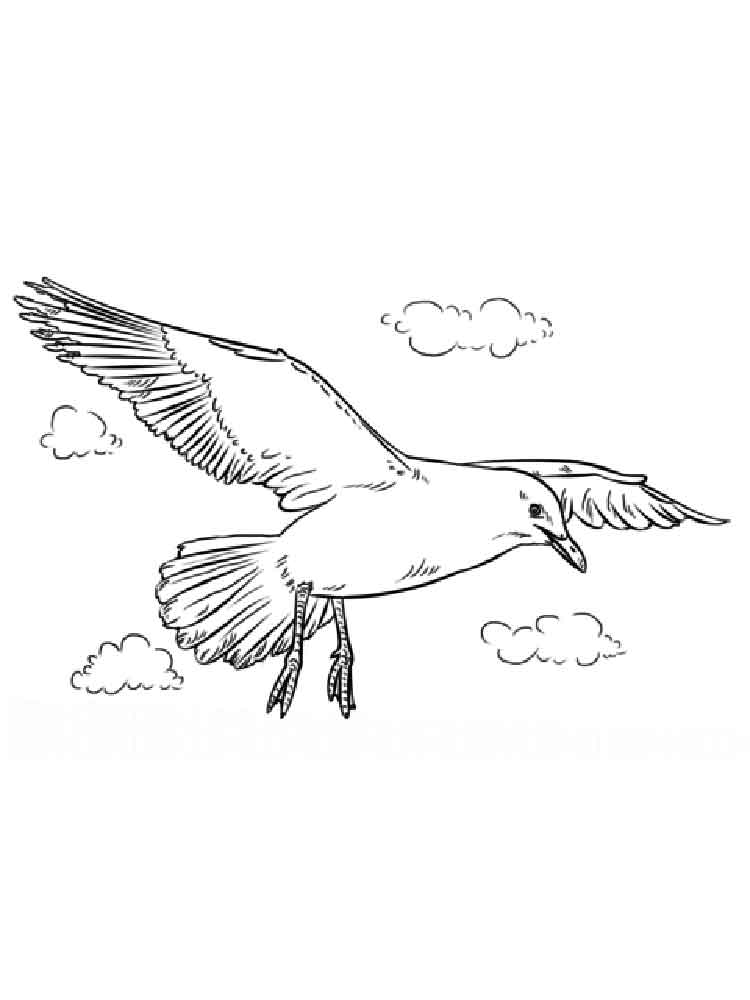 Seagull coloring pages. Download and print Seagull