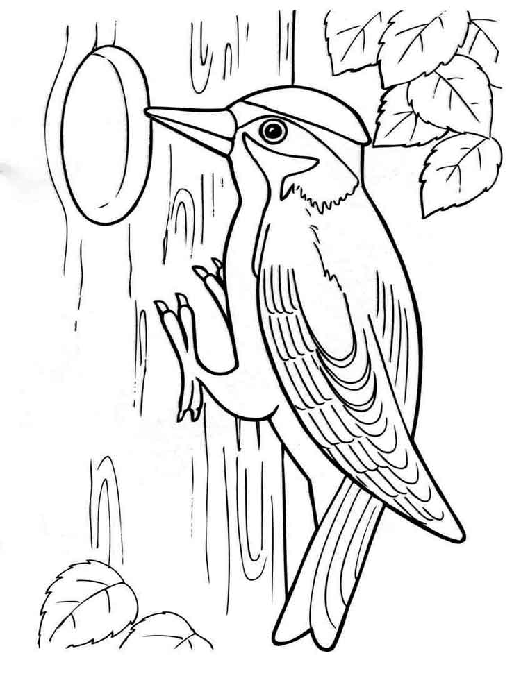 Pheasant Bird Coloring Page Coloring Pages