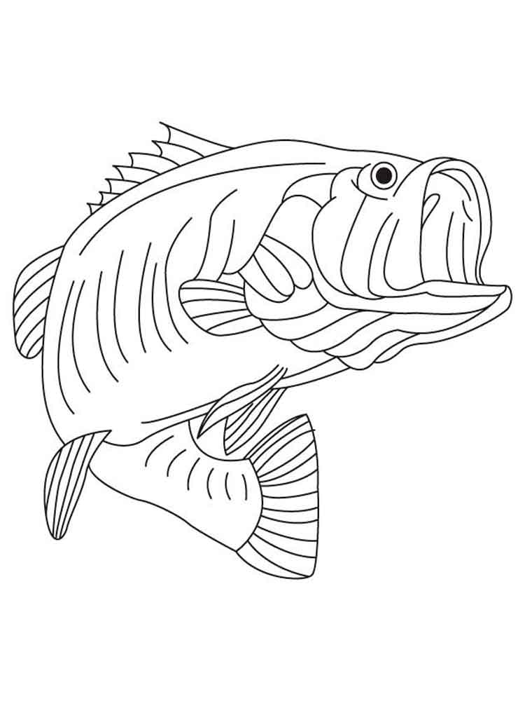 Bass fish coloring pages. Download and print Bass fish