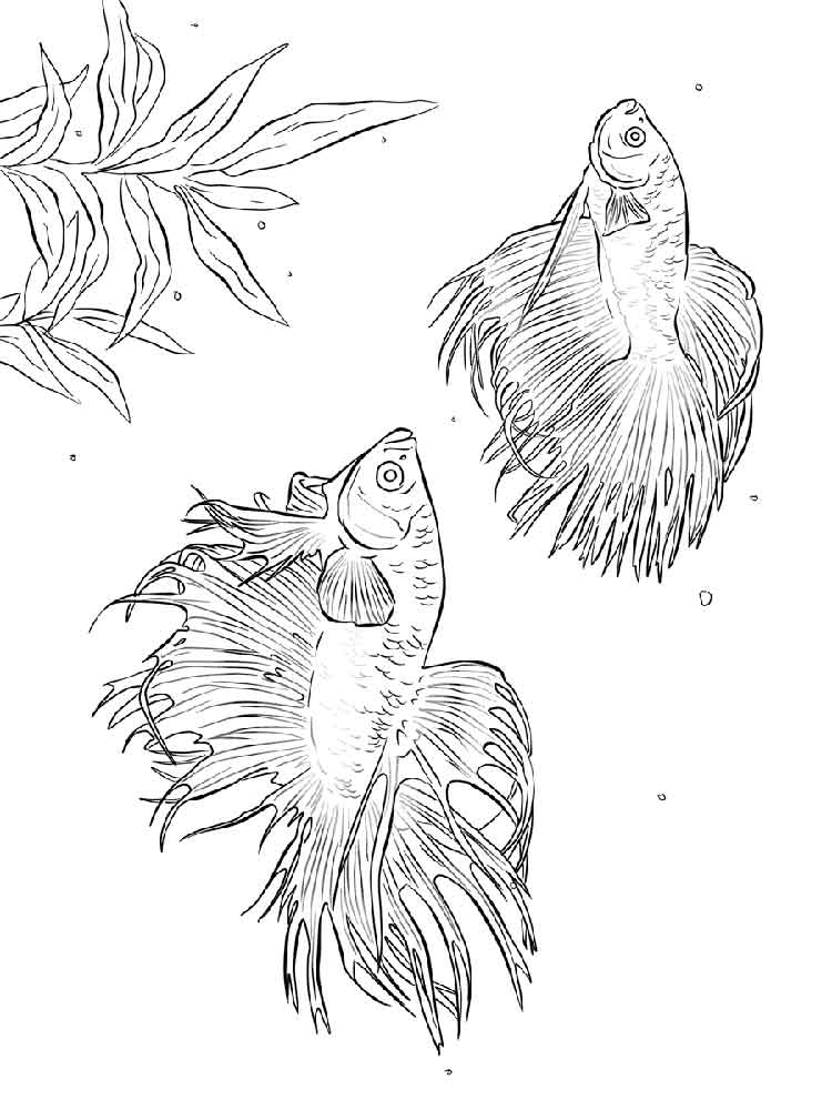 Betta fish coloring pages. Download and print Betta fish
