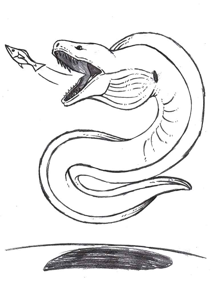 Eel coloring pages. Download and print Eel coloring pages.