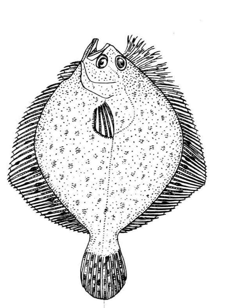Flounder fish coloring pages. Download and print Flounder
