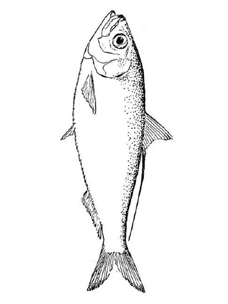 Diagram Of A Bass Fish