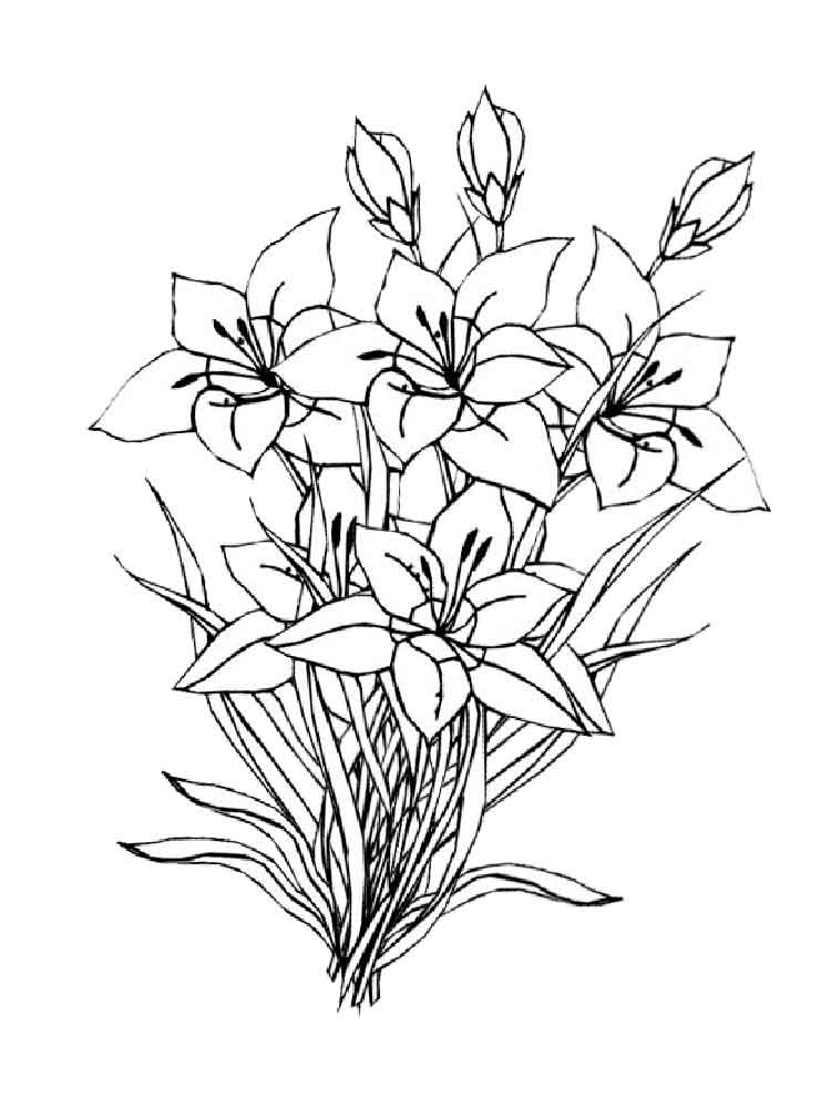 Amaryllis coloring pages. Download and print Amaryllis