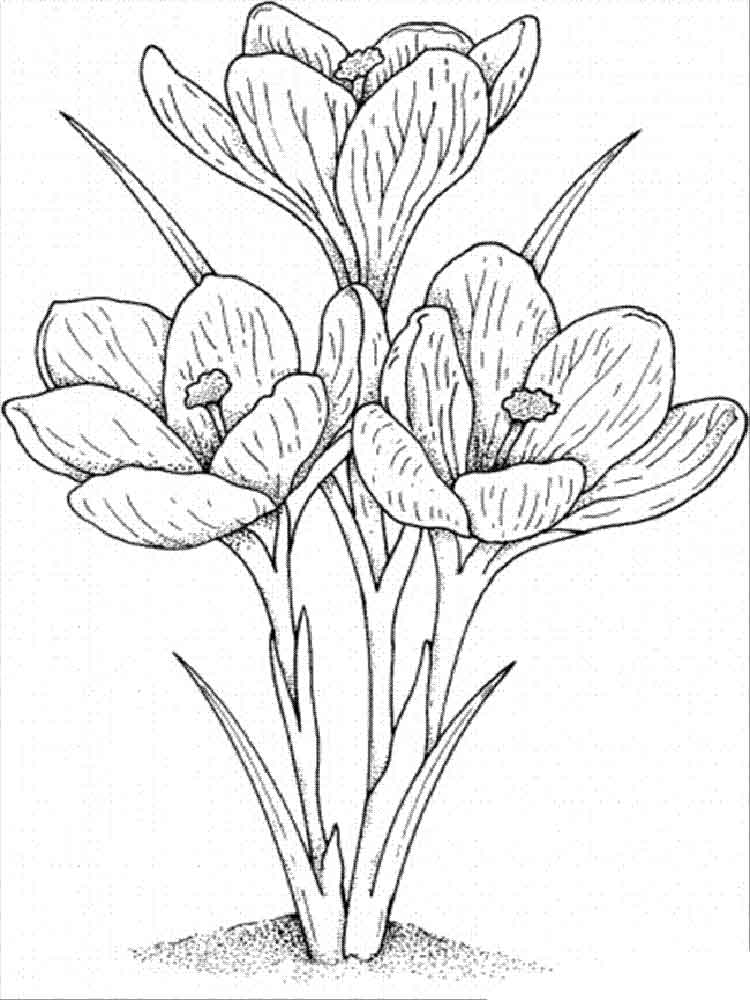 Carnation Flowers Coloring Page