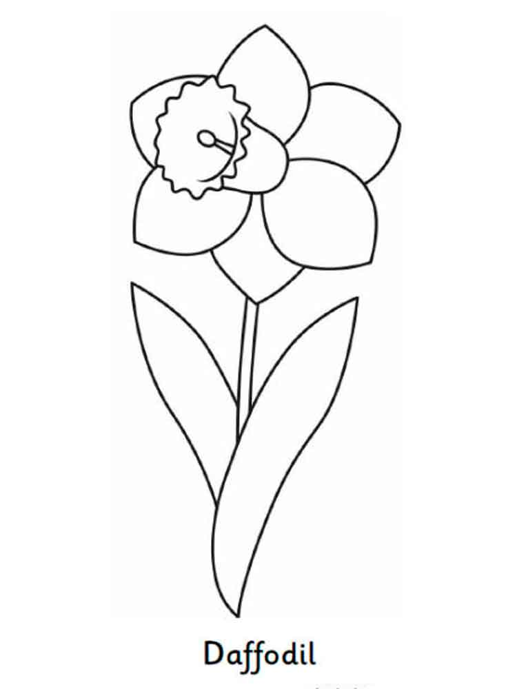 Daffodil Paper Flower Template Sketch Coloring Page
