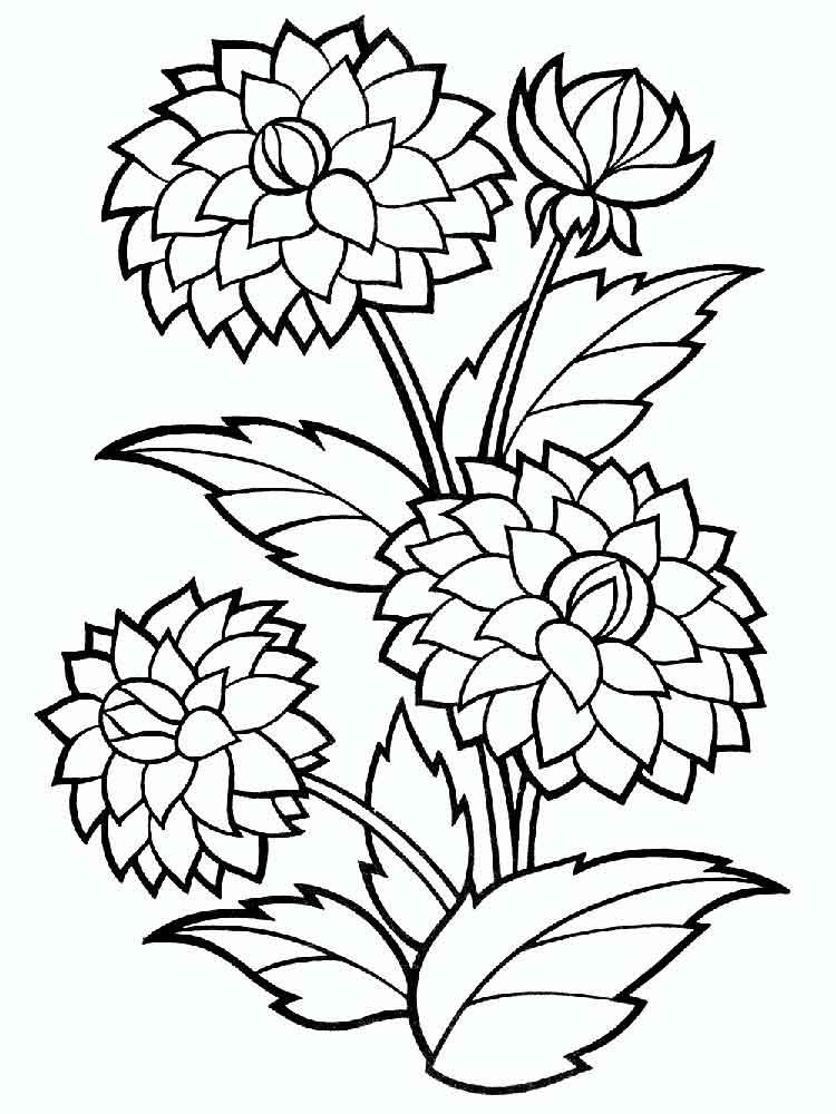 Dahlia Flower coloring pages. Download and print Dahlia