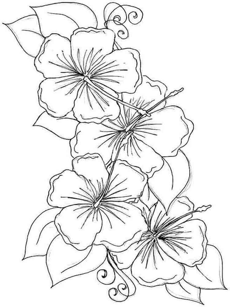 poppy colouring page auto electrical wiring diagram Easy Go Golf Cart Wiring hibiscus flower coloring pages download and print