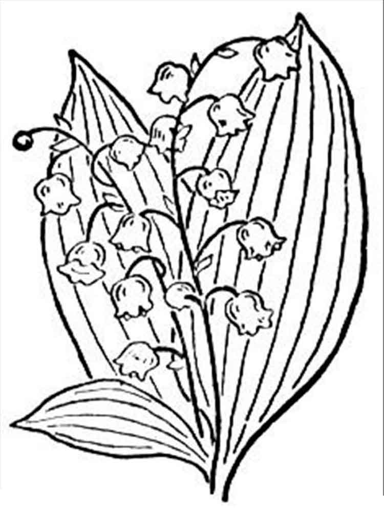 Lily of the valley coloring pages. Download and print Lily