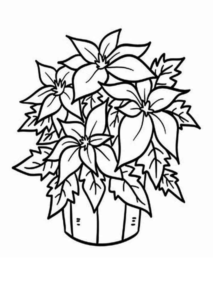 Poinsettia Flower coloring pages. Download and print