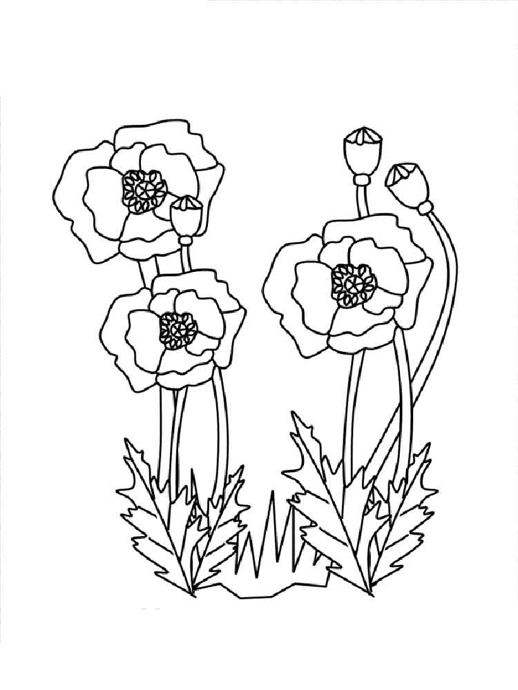Poppy Flower coloring pages. Download and print Poppy