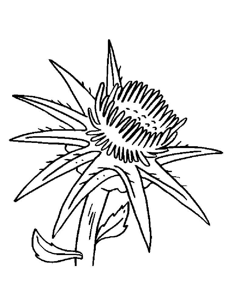 Thistle Flower coloring pages. Download and print Thistle