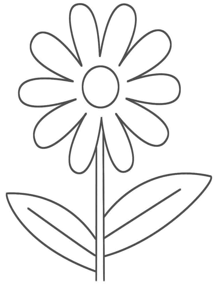 Chamomile Flower coloring pages. Download and print