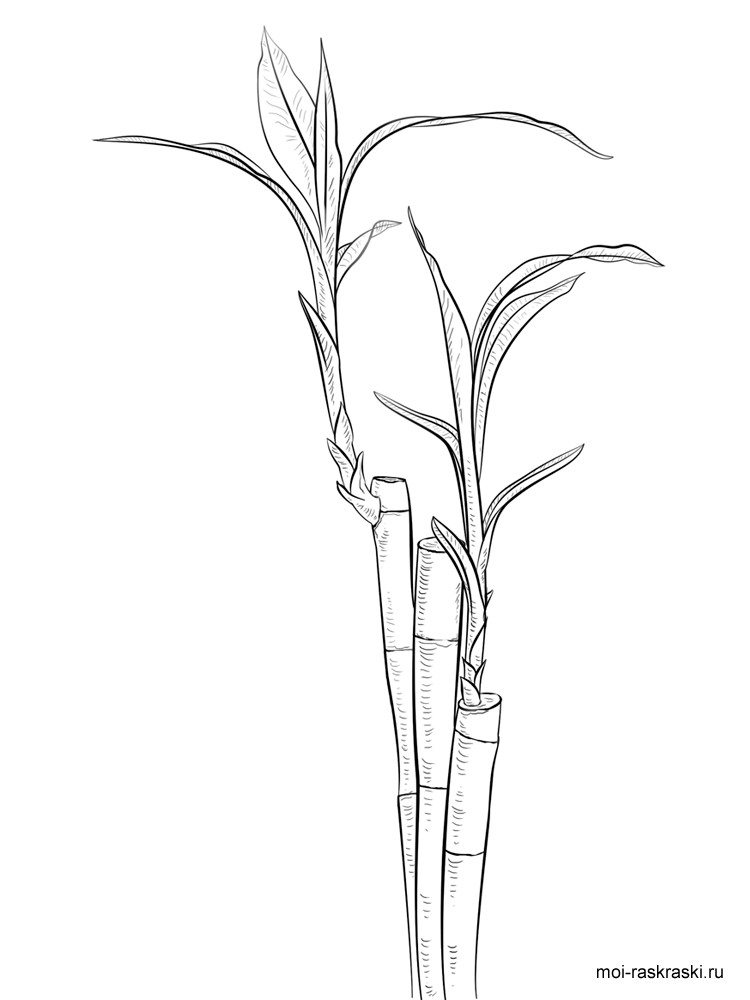 Bamboo coloring pages for kids. Free Printable Bamboo Tree