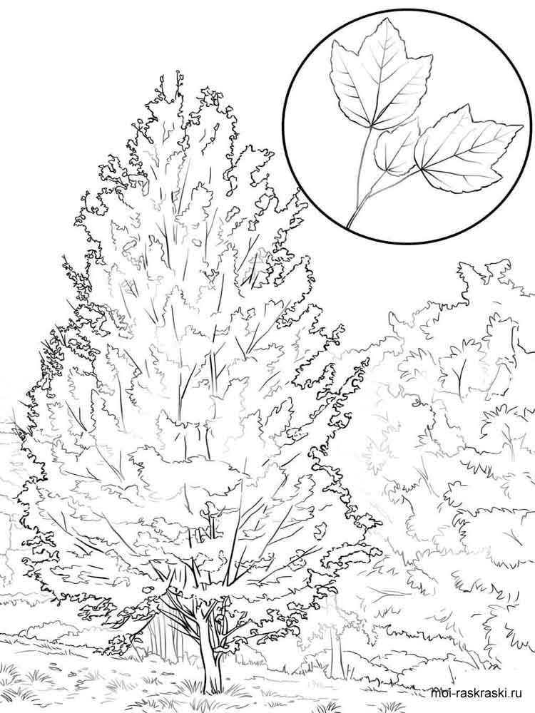 Ash Tree Coloring Pages
