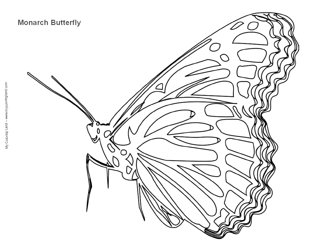 parts of a butterfly diagram ruud air handler wiring life cycle blank free engine image for user
