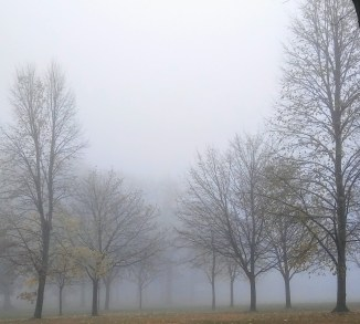 Foggy with trees no leaves