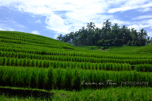 rice-terrace-2