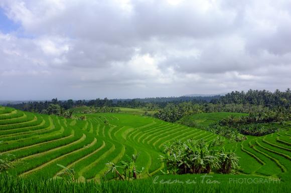 rice-terrace-3