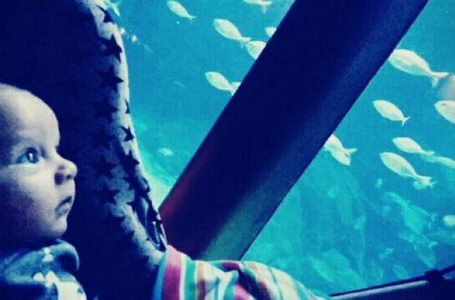Visita al Aquarium Finisterrae en A Coruña