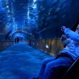 MVIMG 20181003 114231 - L'Oceanogràfic de València, l'aquari més gran d'Europa