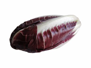 Early Red Radicchio form Treviso, Italian radicchio