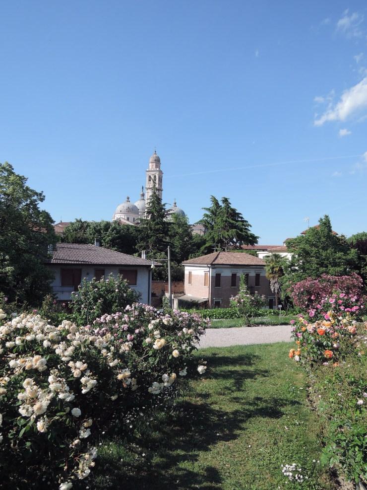 Santa Giustina Rose Garden