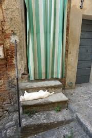 Sleeping cat, Cetona