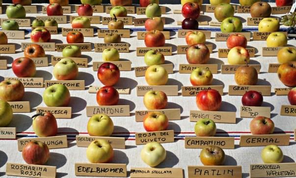 Ancient Fruits, Piante e Animali Perduti