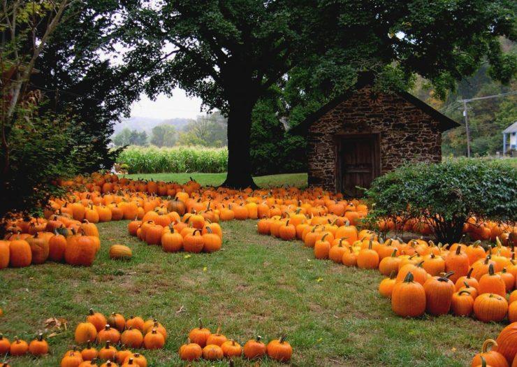 Halloween pumpkins in USA
