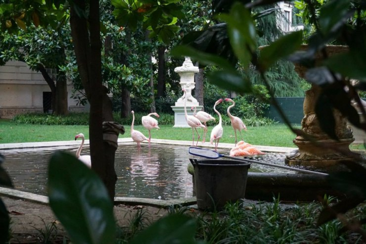 Flamingos in Milan