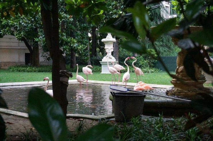 Flamingos in Milan