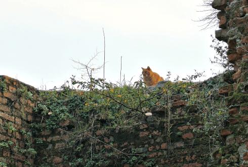 Rossini Cat