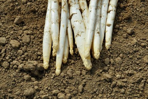 Asparagi di Badoere igp