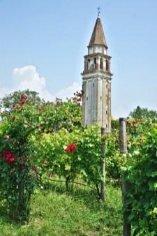 Vineyard, roses and campanile
