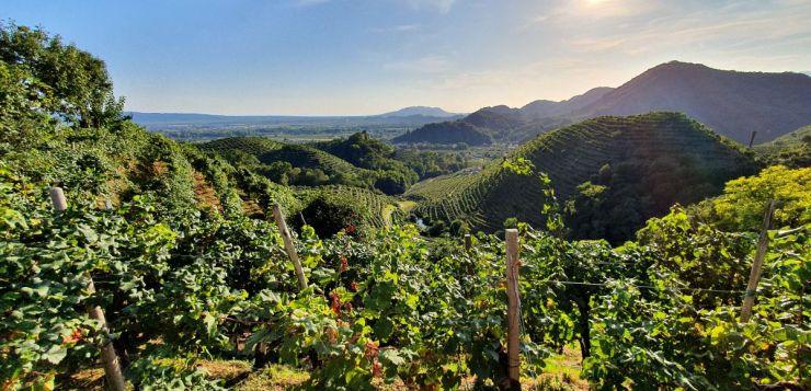 Prosecco road itinerary: What to see in the Conegliano Valdobbiadene area