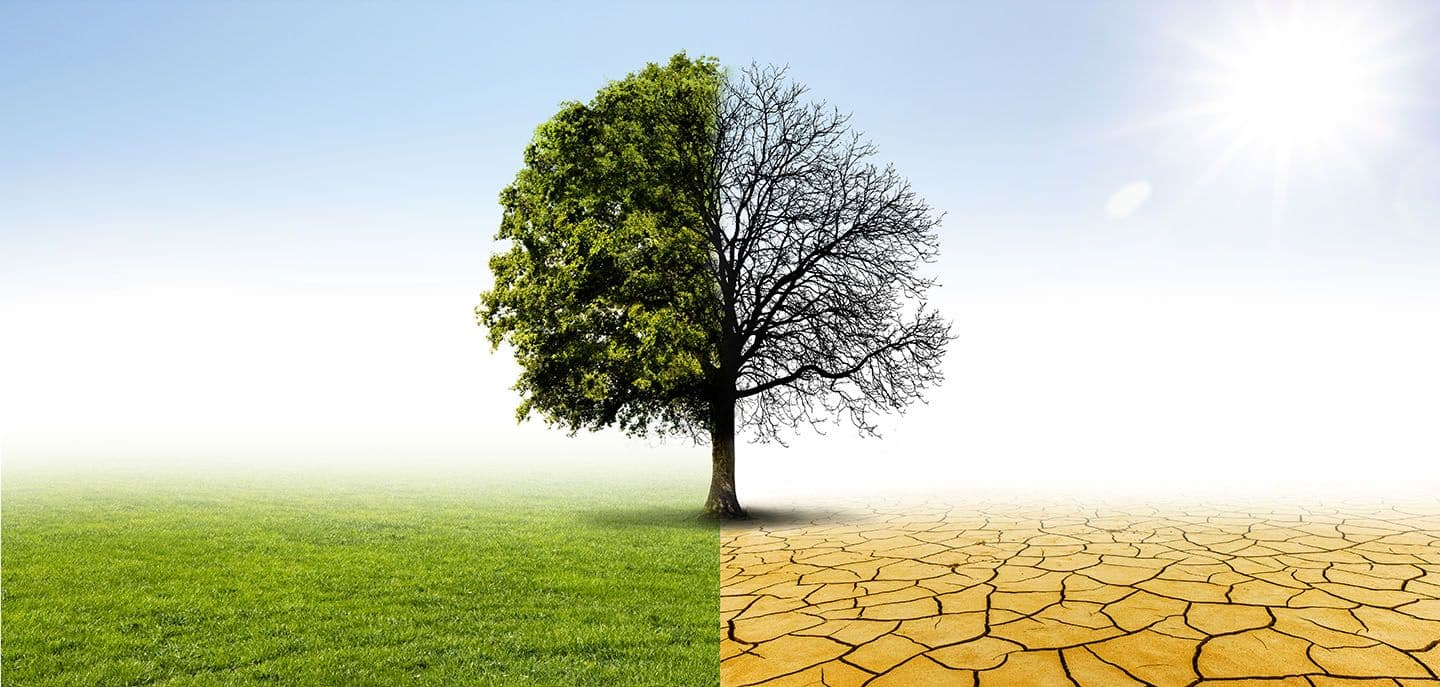 Avoid Dry Stress On Trees With Trichoderma