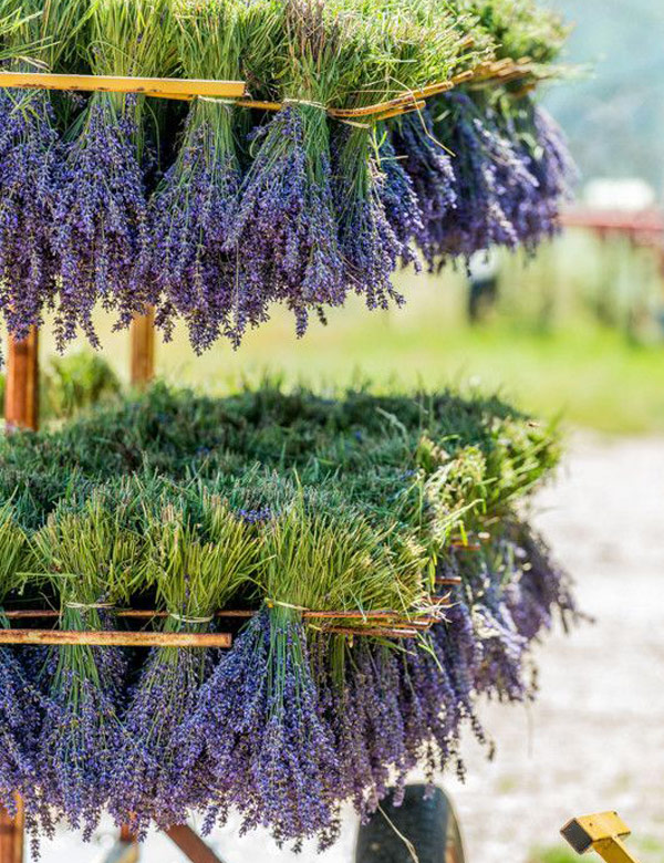 Summer inspiration: the lovely scent of lavender   My Cosy Retreat